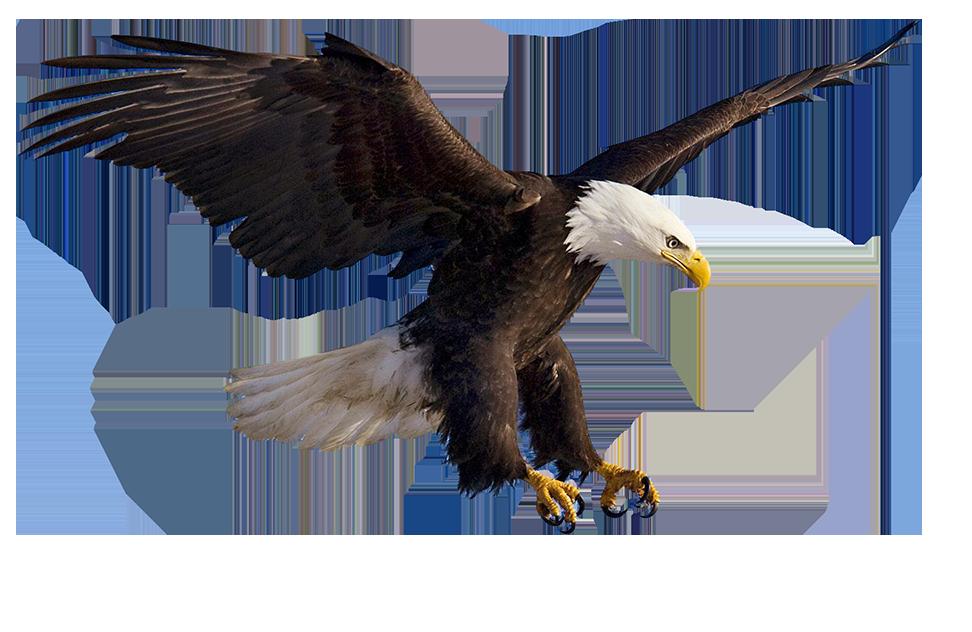 Eagles clipart prey. Bald eagle clip art