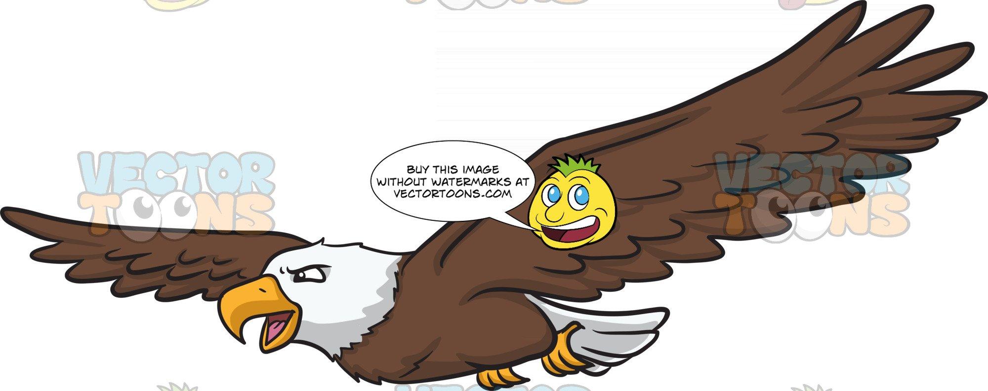A bald eagle soaring. Eagles clipart sky