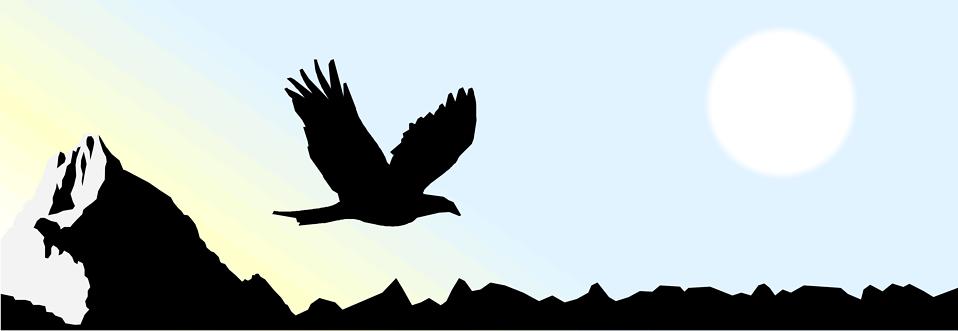 Eagles clipart sky. Eagle free stock photo