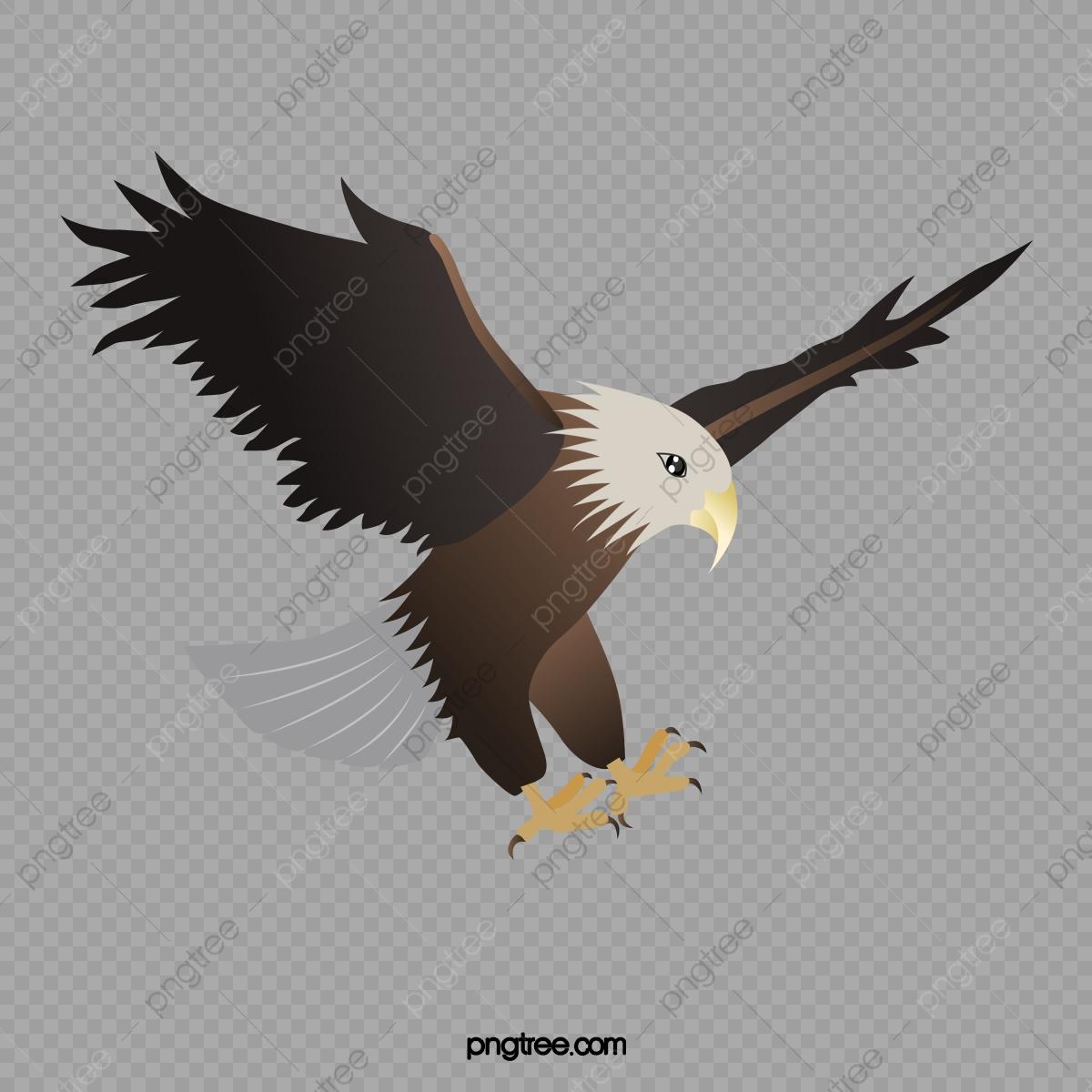 Eagles clipart sky. Flying eagle fly animal