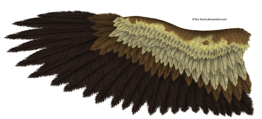 Wing clipart feather wing. Eagle by k ku