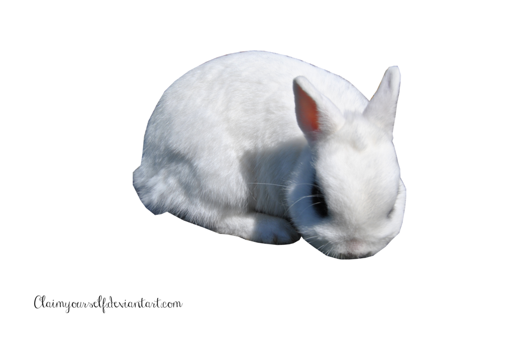 Png free icons and. Ears clipart white rabbit