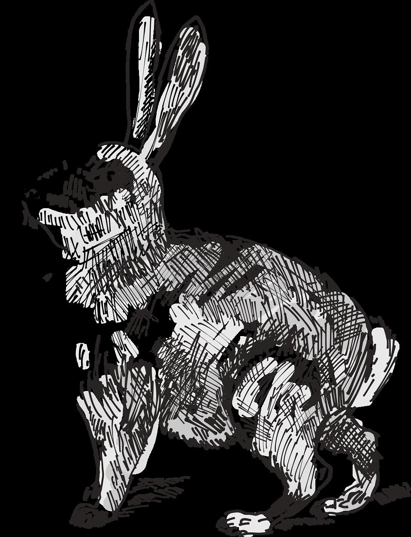 Ears clipart white rabbit. Free stock photo illustration