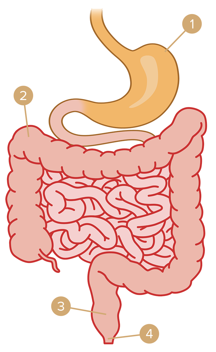 Hurt clipart gastric. The fine art of