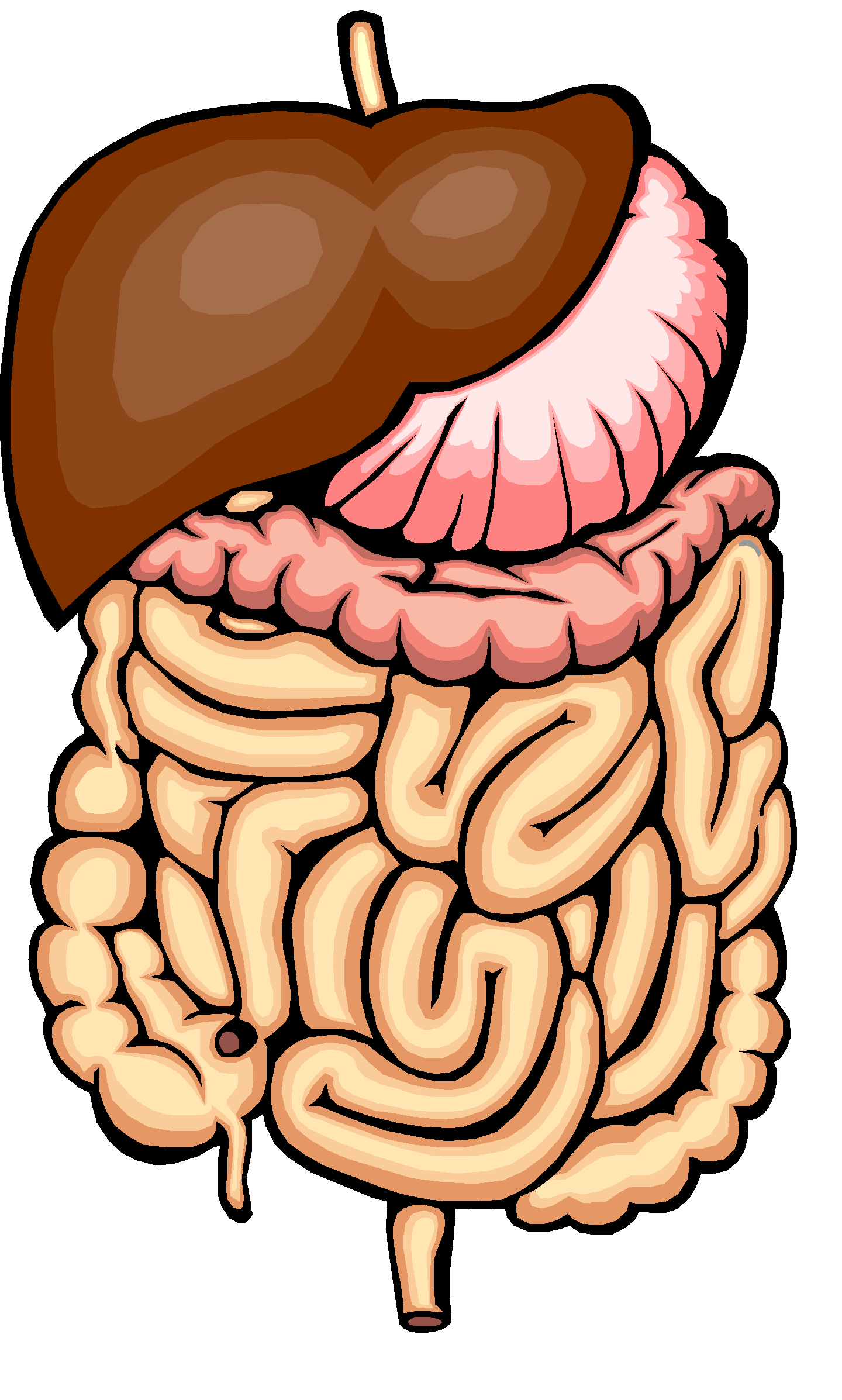 Mouth clipart digestive system mouth. The pptx esophagus