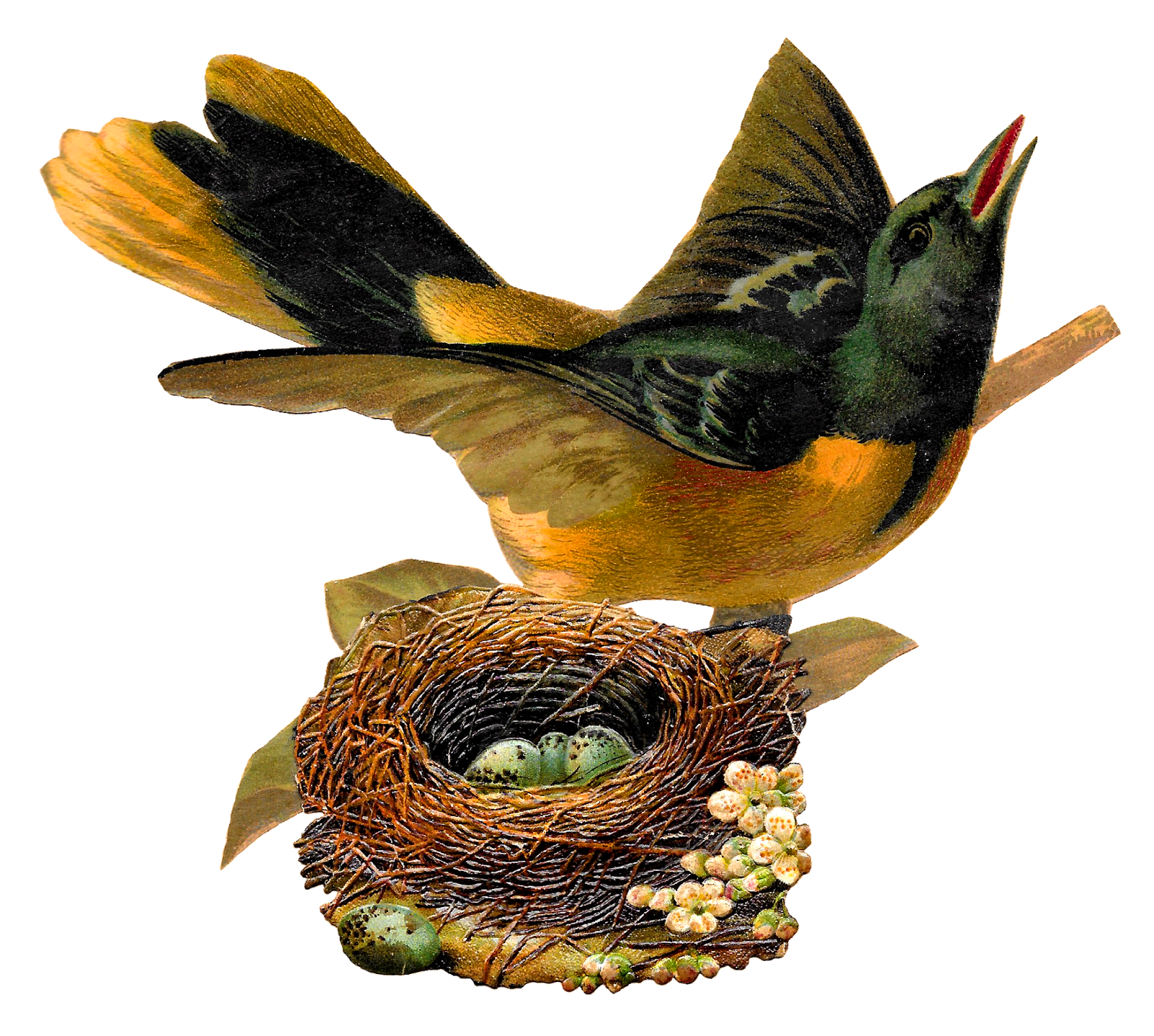 Antique images oriole bird. Eggs clipart nest