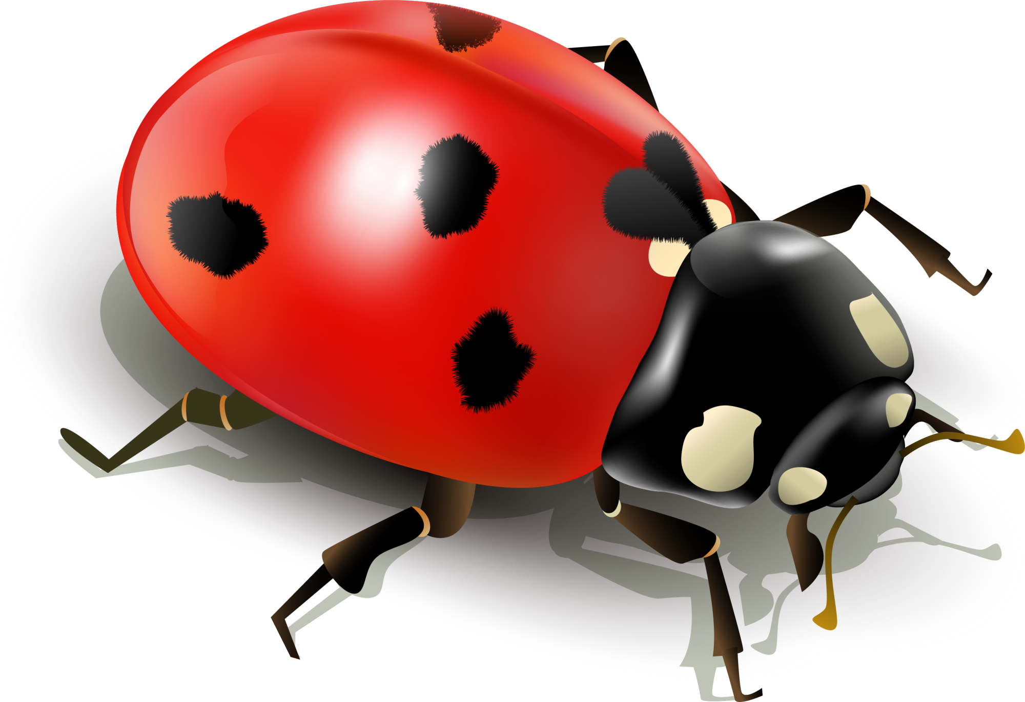 Insect ladybird clip art. Ladybug clipart egg