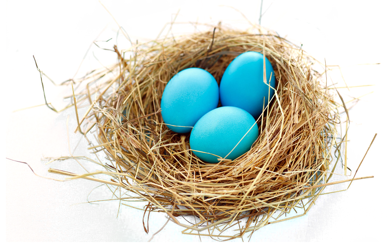 Png image purepng free. Nest clipart blue egg