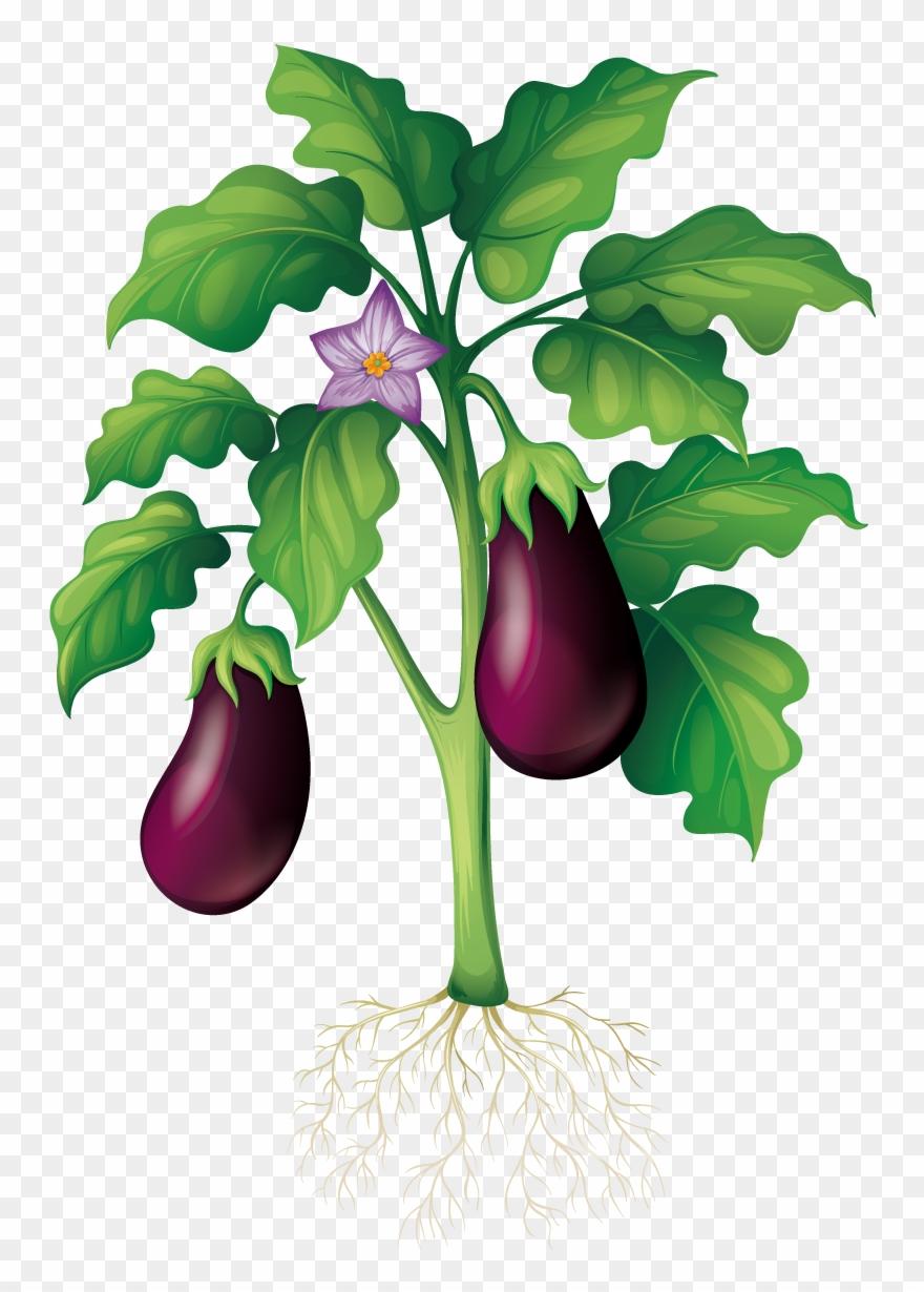 Eggplant garden school vegetable. Gardening clipart vegtable