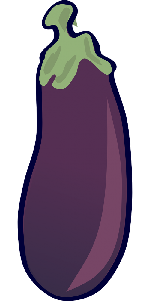 Aubergine eggplant solanum melongena. Zucchini clipart zucchini plant