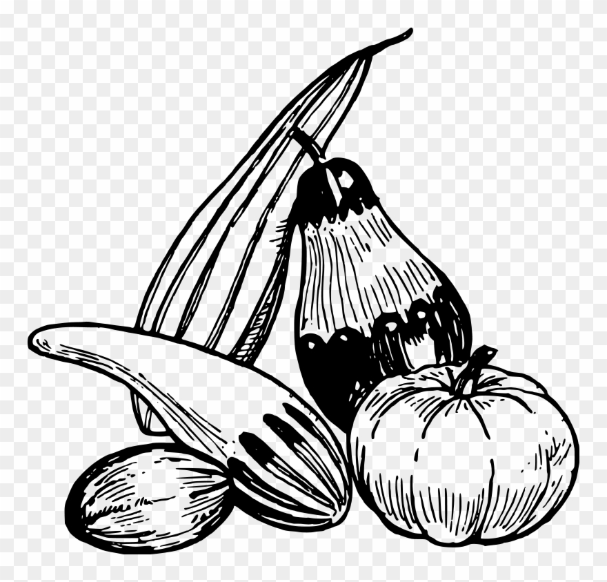 Drawing fruit line art. Eggplant clipart single vegetable