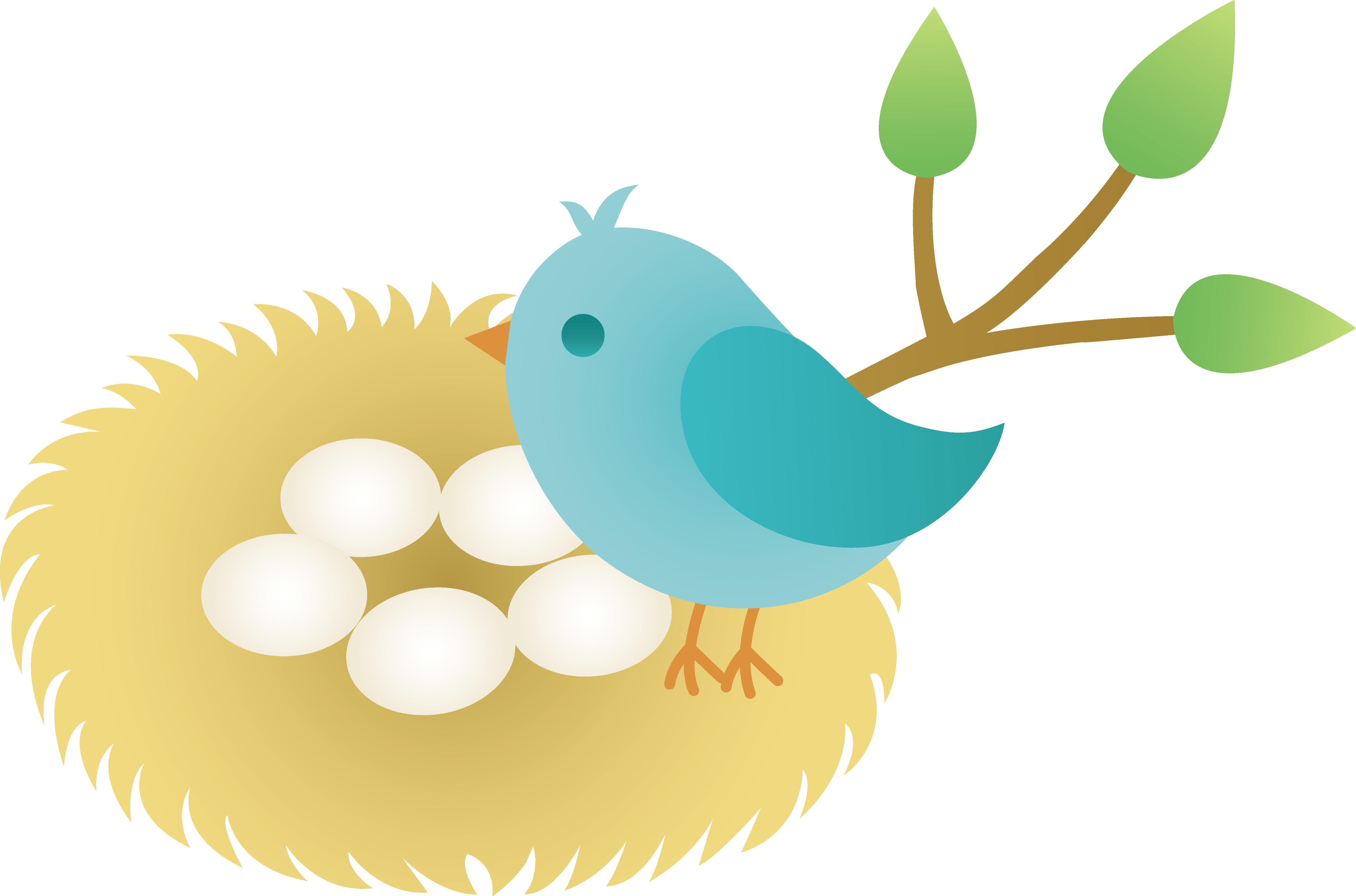 Blue bird with of. Nest clipart hatch