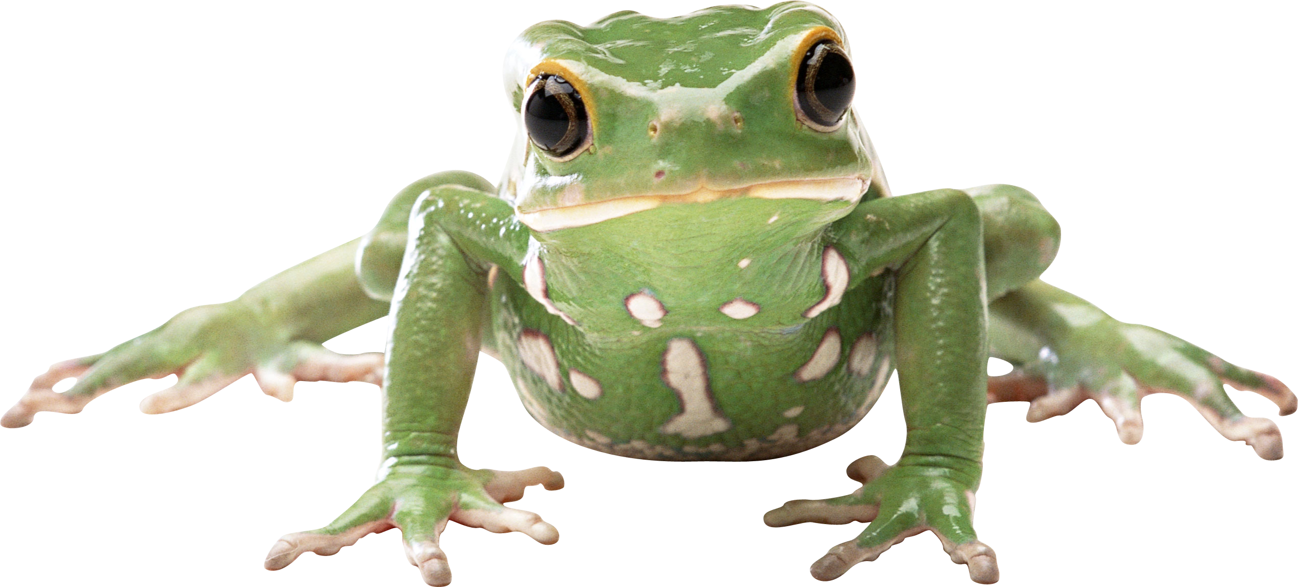 frog clipart glass frog
