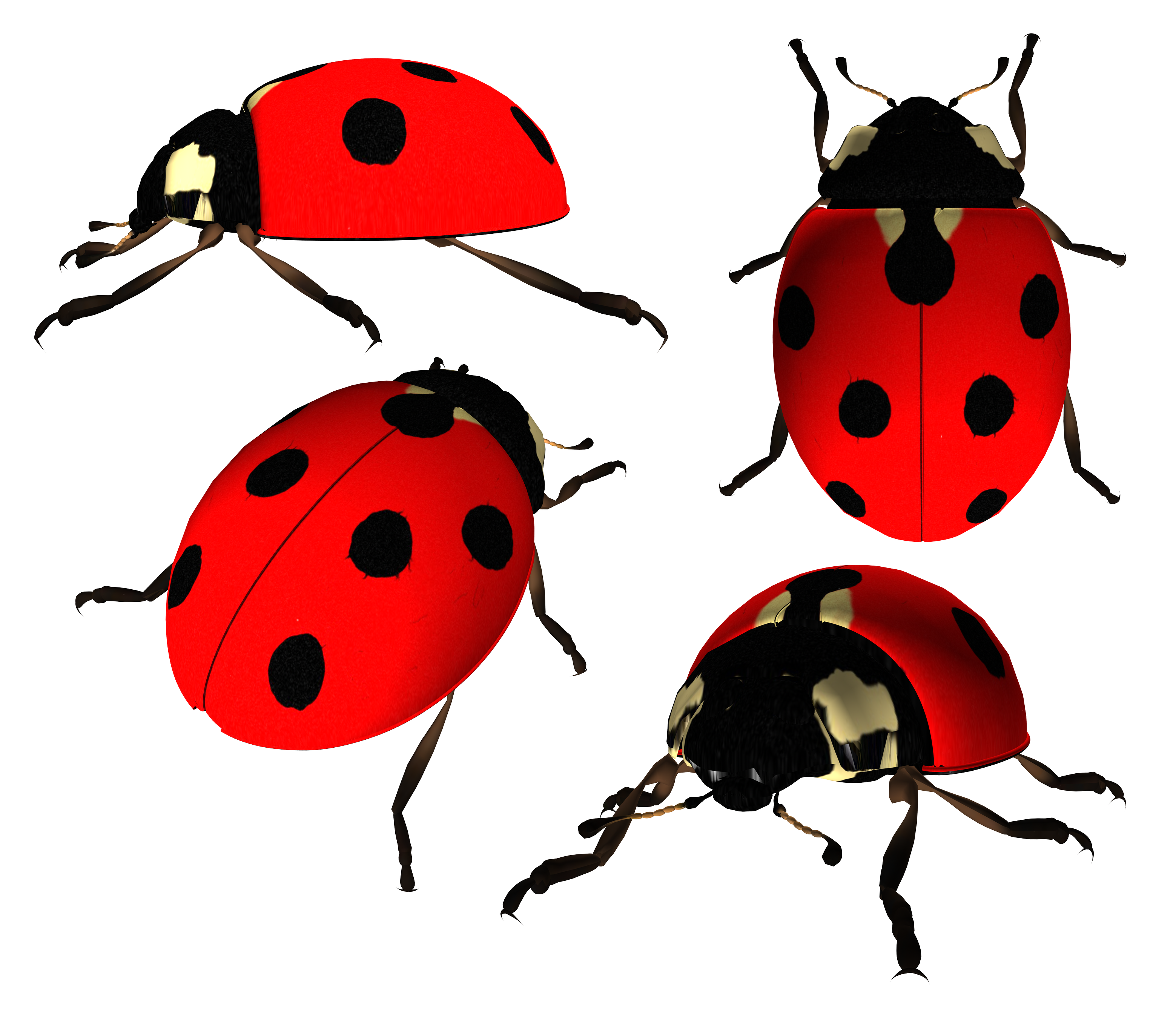 Eleven isolated stock photo. Ladybug clipart transparent background