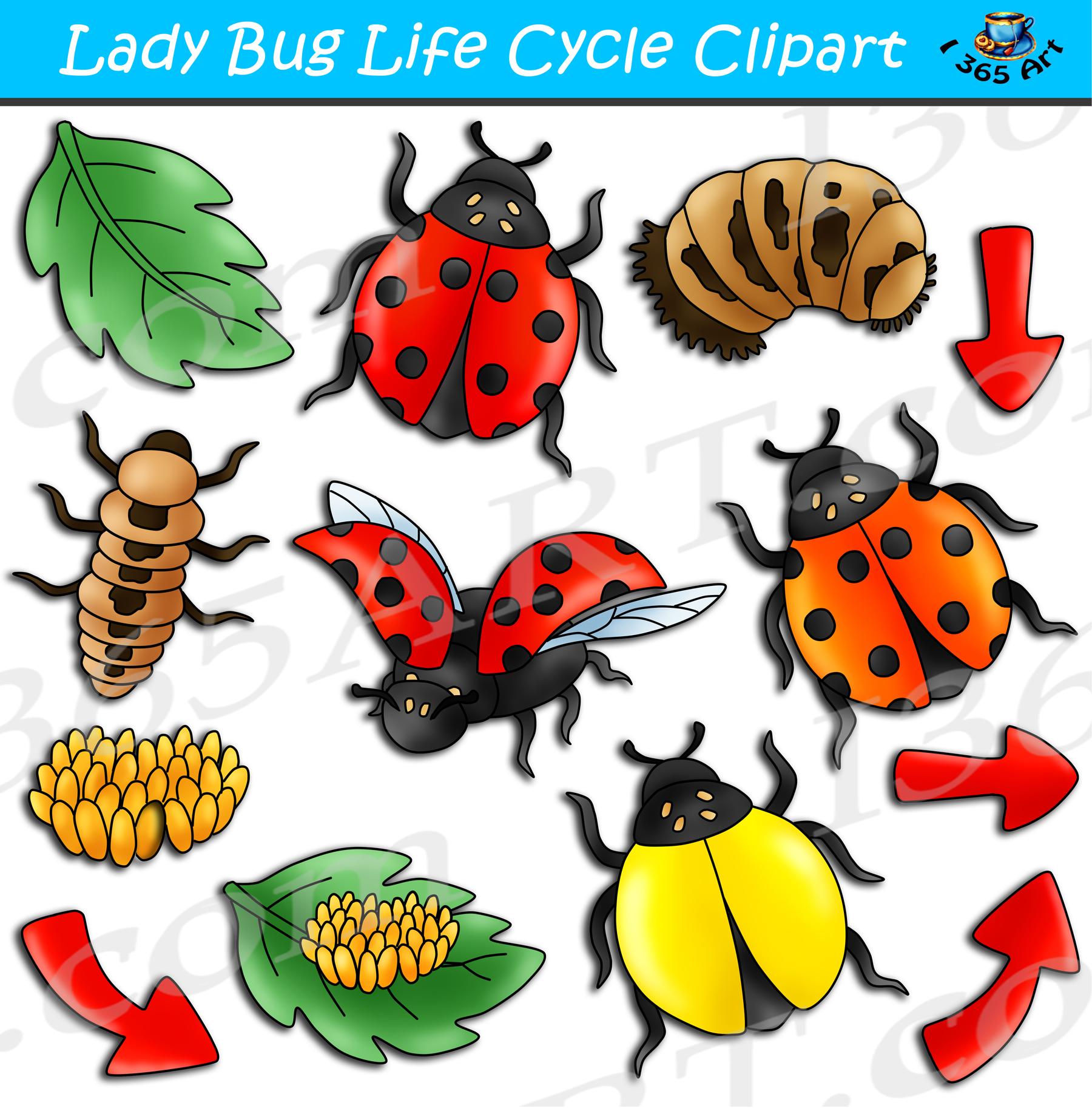 Bundle . Ladybug clipart ladybug life cycle