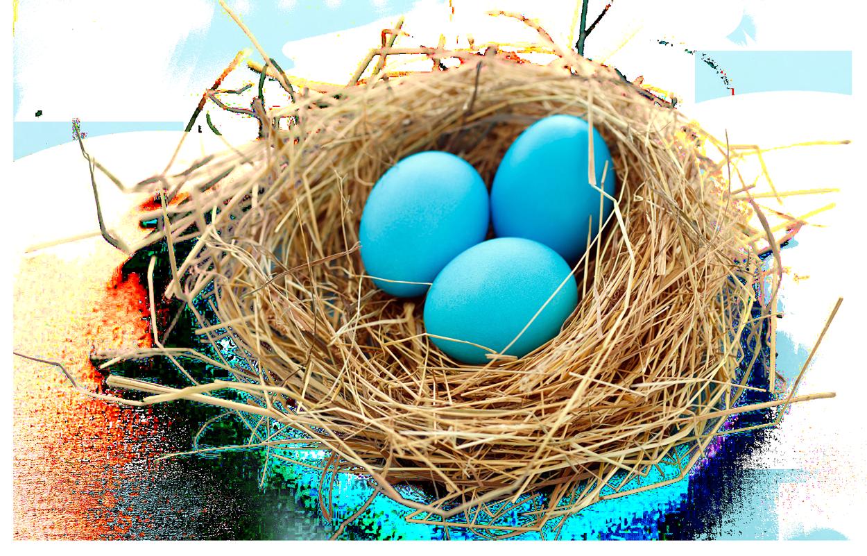 Eggs clipart nest. Png transparent free images
