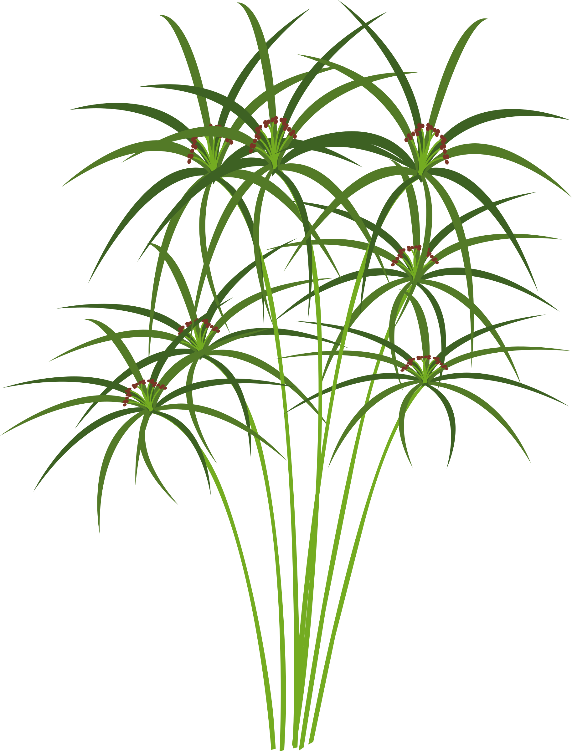 Paper ancient cyperus papyrus. Egypt clipart tree egypt