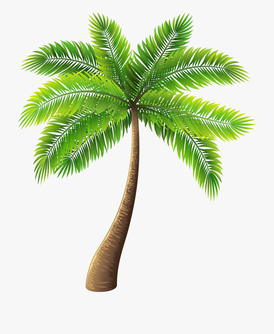 Scene drawing images png. Palm clipart pom tree