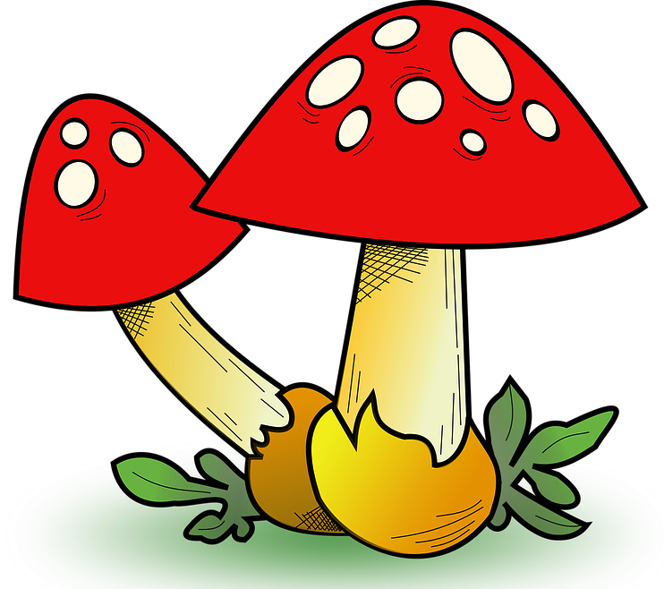 Einstein clipart gifted. Mushrooms writing is fun