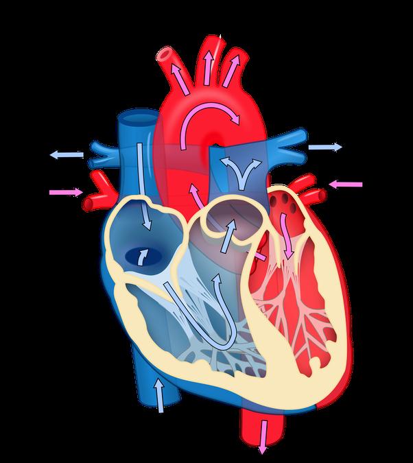 Heartbeat clipart damage. Is it true that