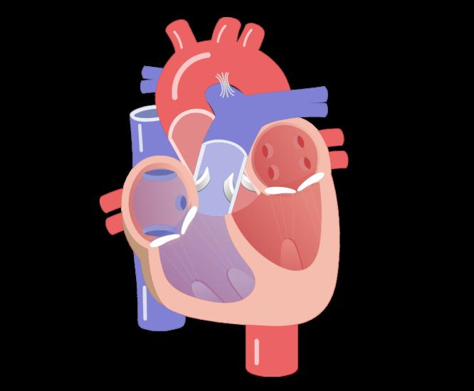 Heartbeat clipart telemetry. On emaze pulmonic