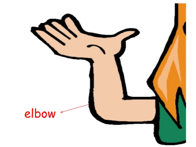 Parts flashcards . Elbow clipart body part