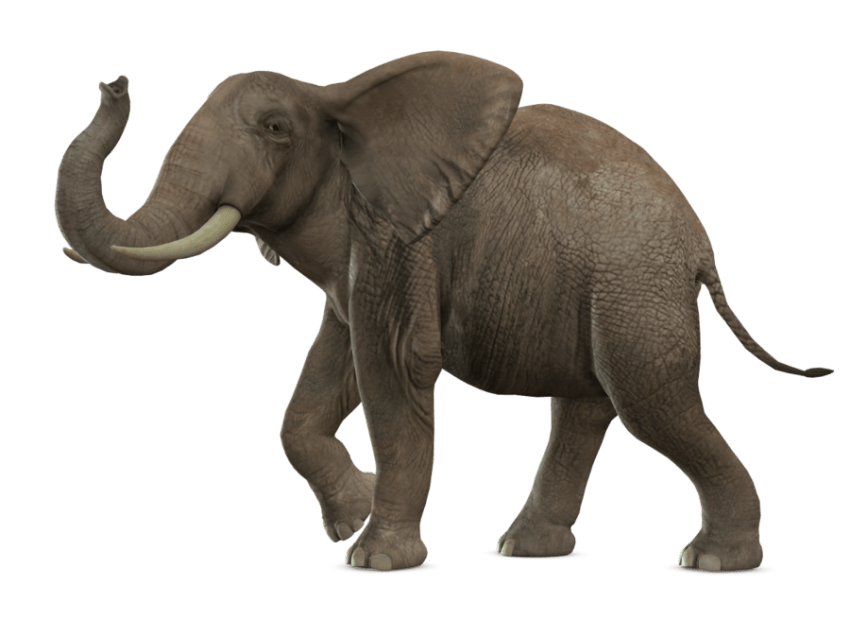 Elephants Clipart Side View Elephants Side View Transparent Free For Download On Webstockreview 2020 Download gray elephant standing png images background ,and download animals png free photo png stock pictures and transparent background with high quality. elephants clipart side view elephants