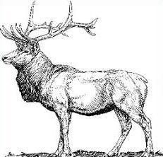 Elk clipart. Free