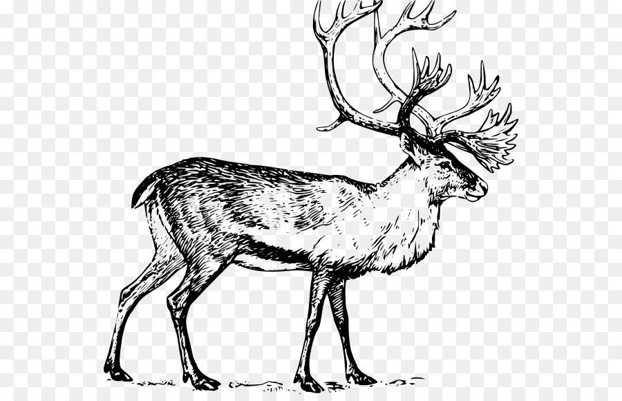 Deer drawing art clip. Elk clipart