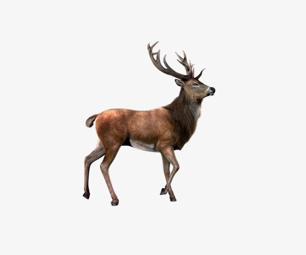 Elk clipart. Christmas design animal png