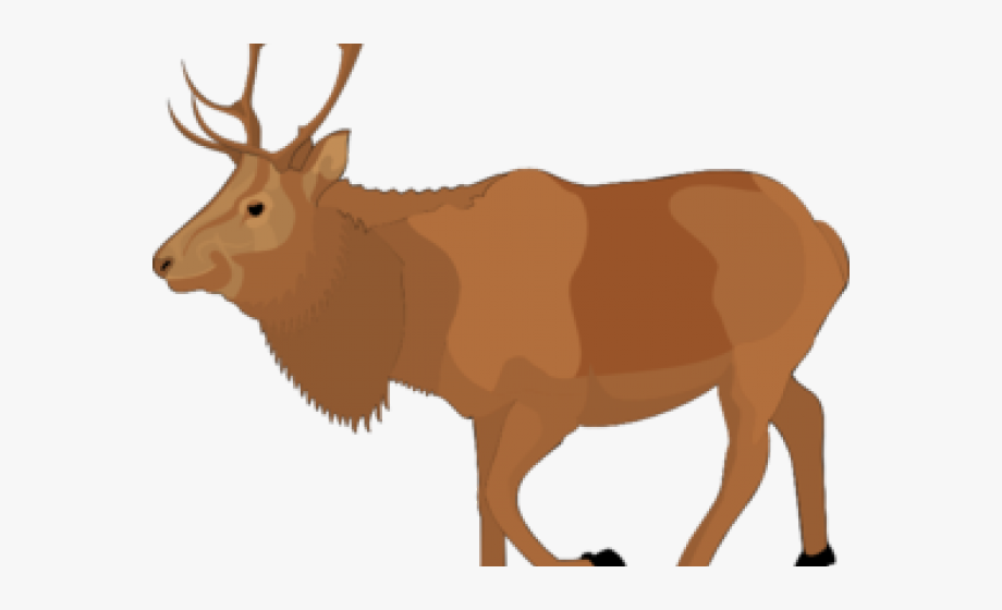 Moose clipart elk. Free animated cliparts cartoons