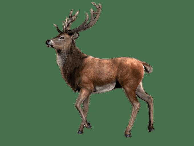 Elk clipart barasingha. Deer images png siewalls