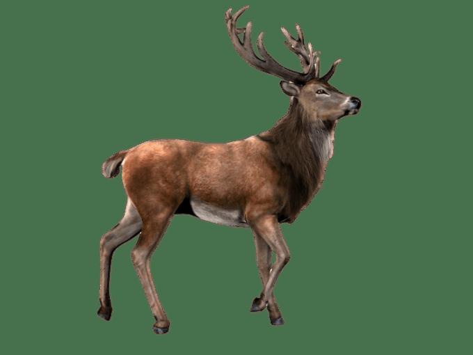 Deer images png siewalls. Elk clipart barasingha