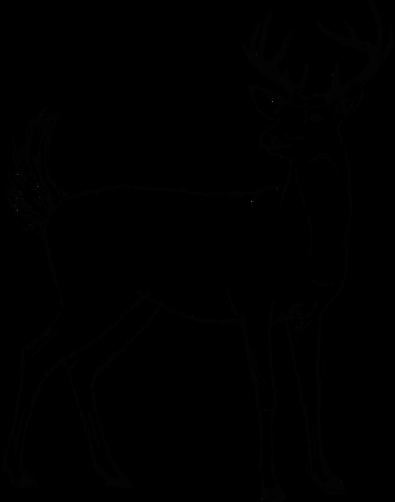Elk clipart barasingha. Deer drawing images at