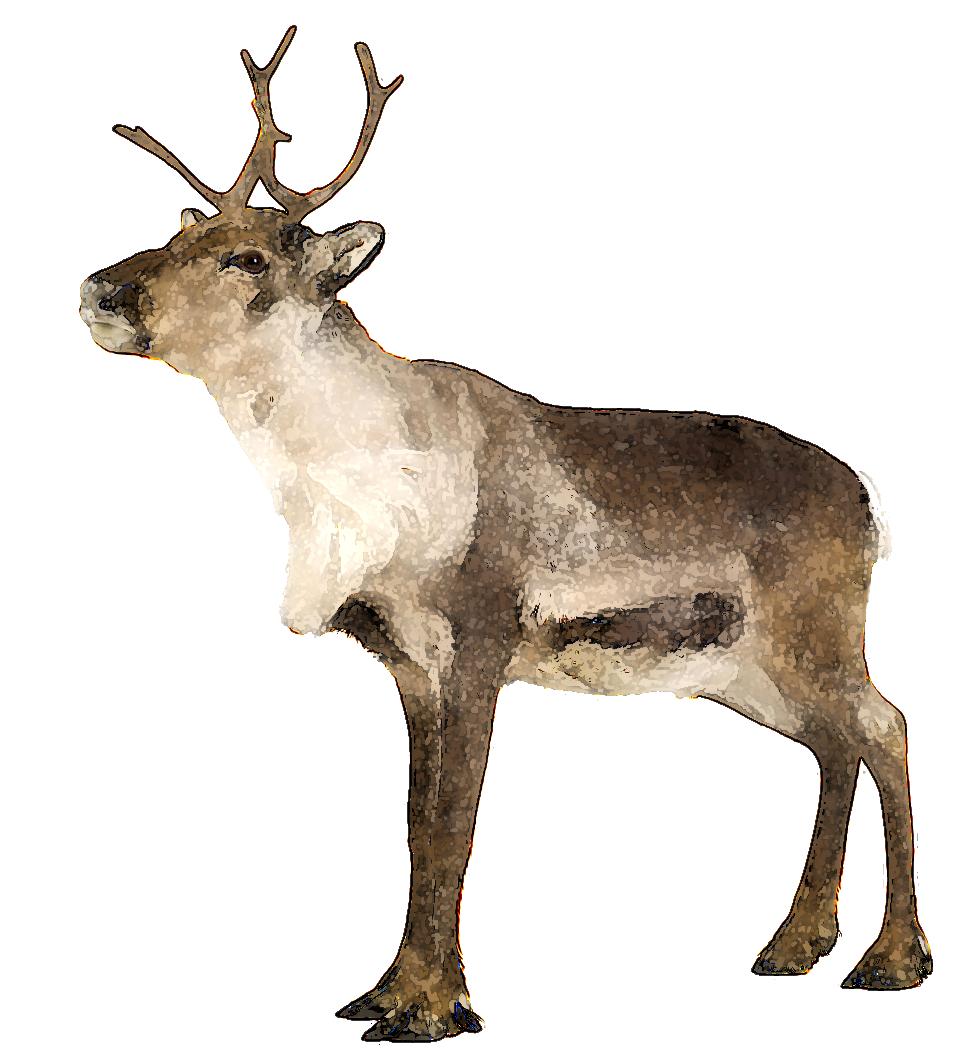 Hunting clipart caribou. Ten ways to modify