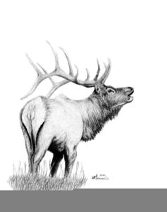 Elk clipart logo. Bugling free images at