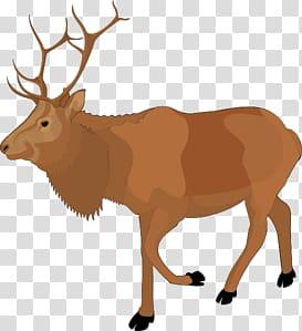Moose background png hiclipart. Elk clipart transparent