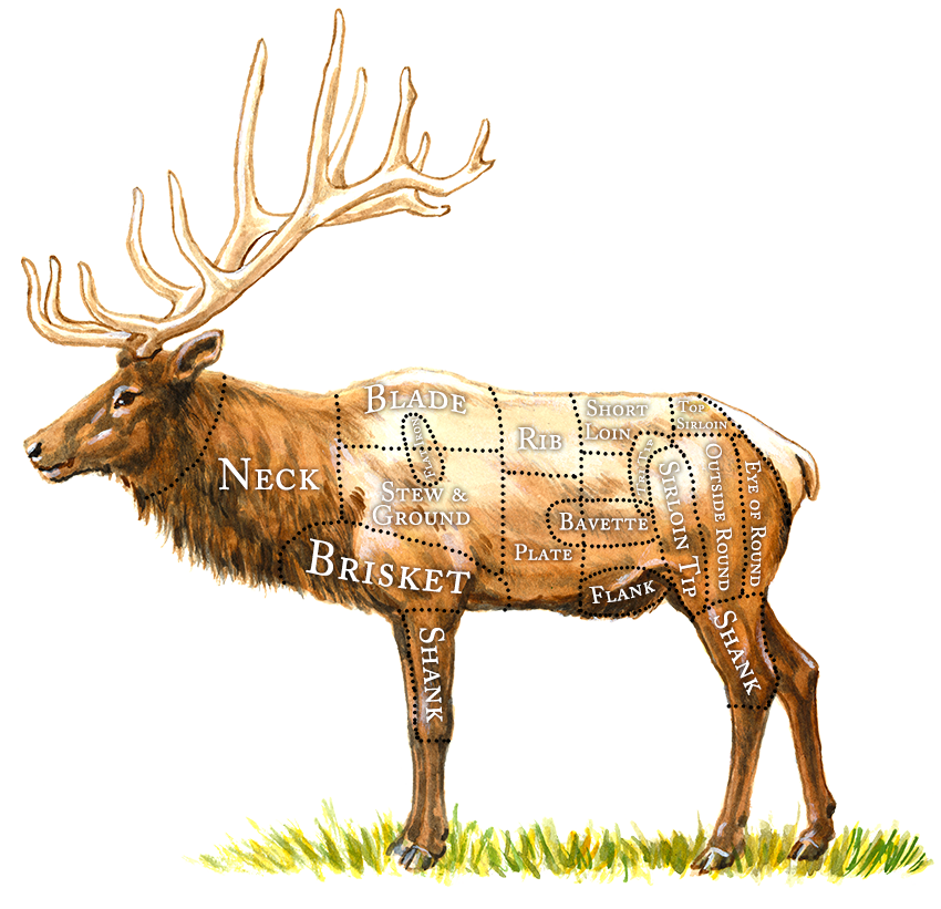 Breaking down the healthy. Elk clipart transparent
