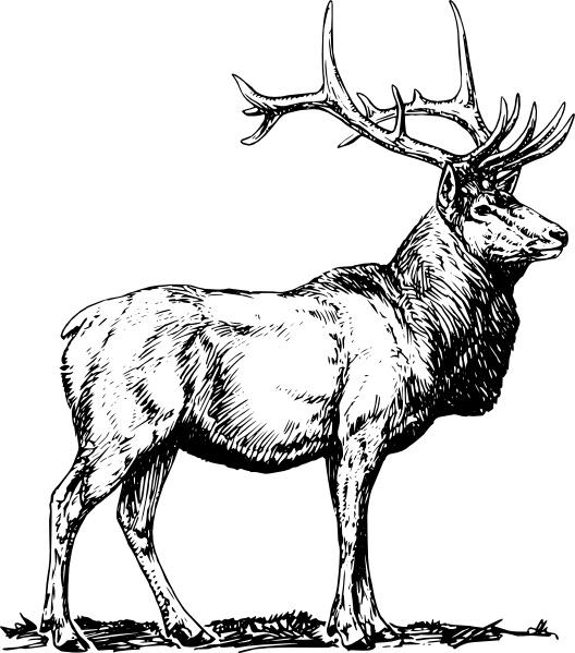 Elk clipart vector. Clip art free in