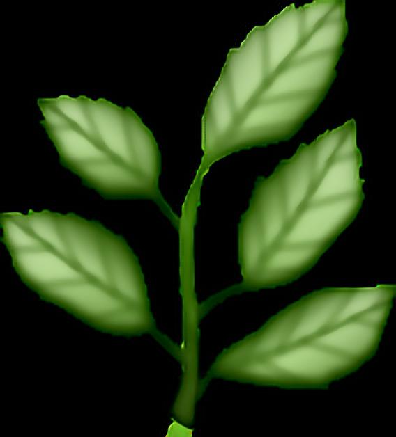 Plant plants green aesthetic. Emoji clipart leaf