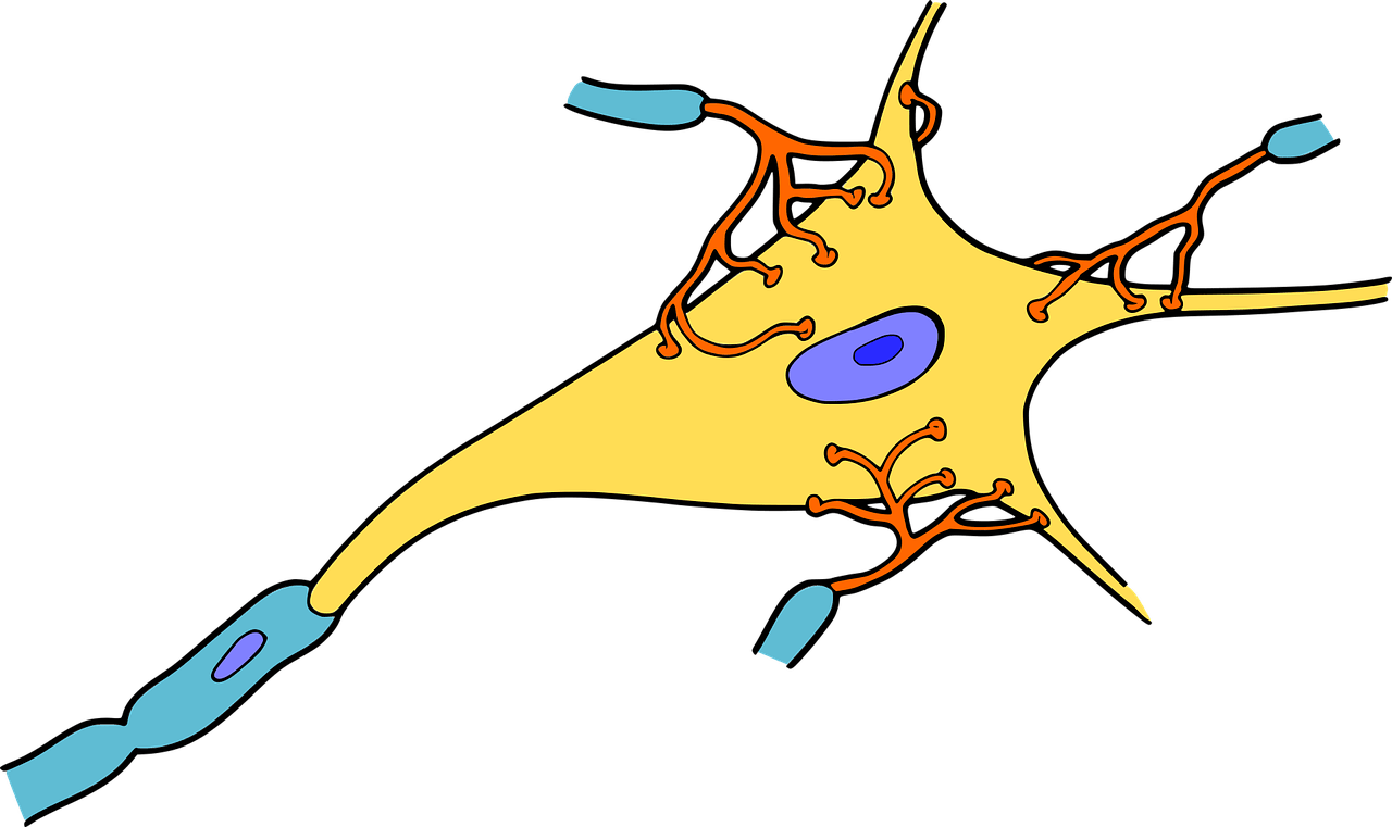 Energy clipart beneficial. Glycogen in neurons of
