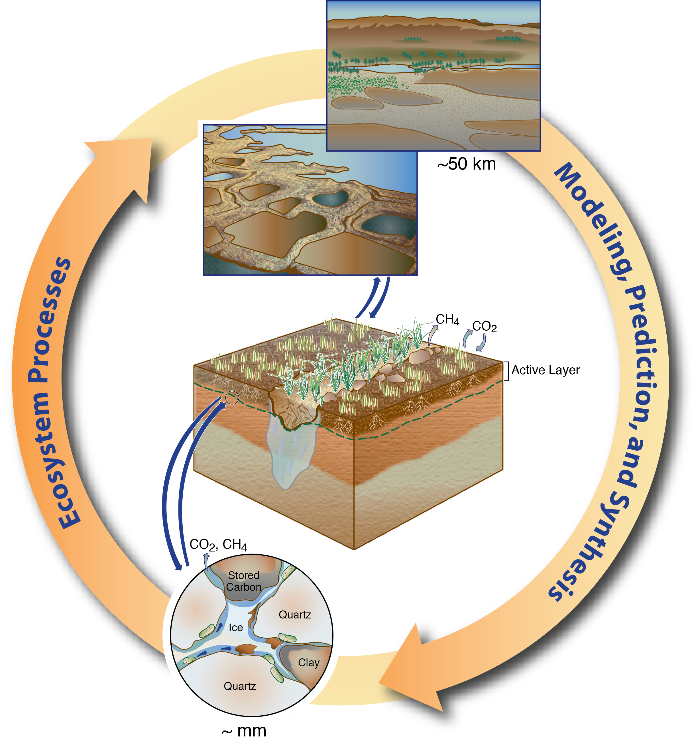 Terrestrial ecosystem science u. Energy clipart environmental study