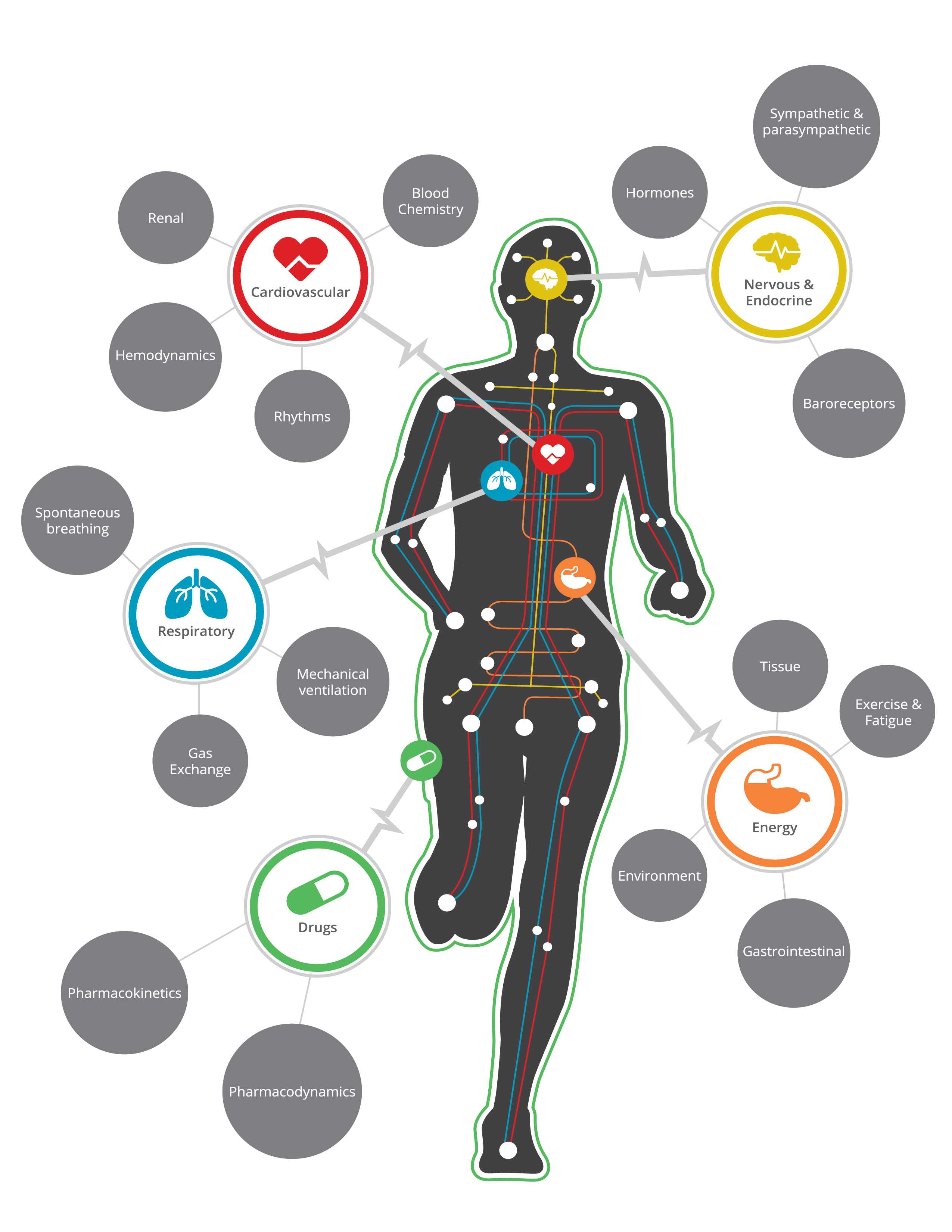 Physiology engine the pulse. Energy clipart exercise physiologist