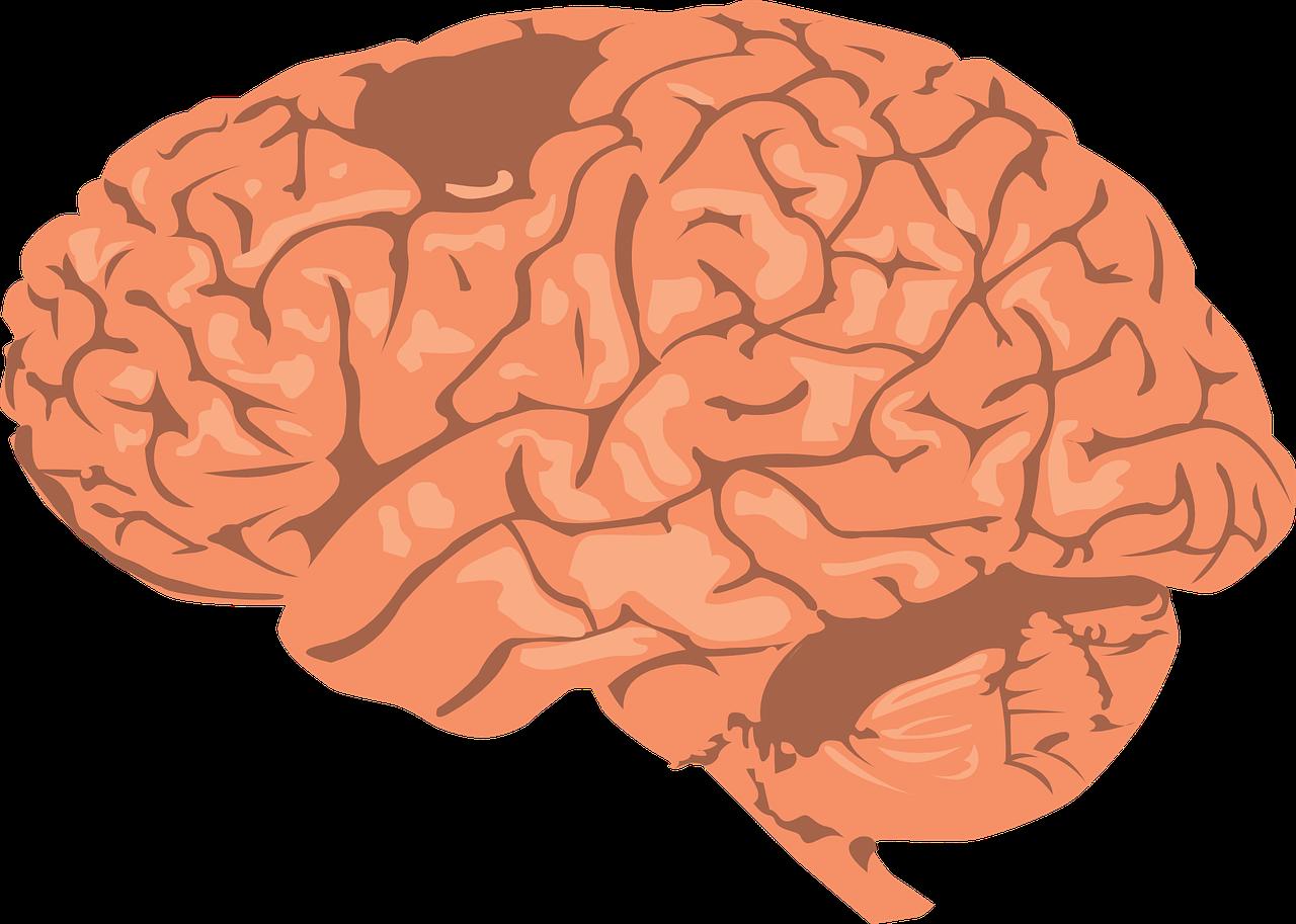 Genius bundle brainwave love. Mind clipart happy mind