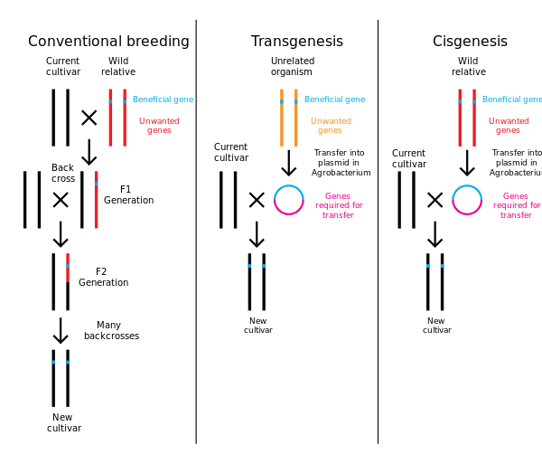 Gene wikiwand comparison of. Engineering clipart genetic engineering
