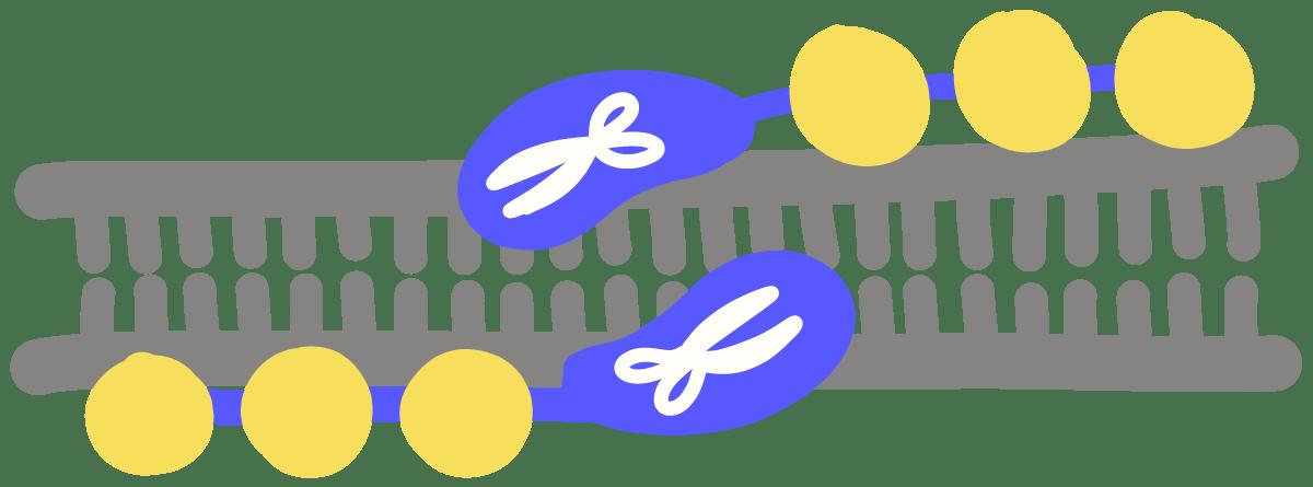 Zinc finger nuclease zfn. Engineering clipart genetic engineering