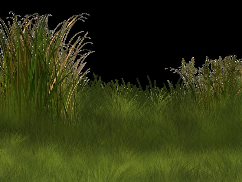 Environment clipart background image. Plant wetland landscape clip