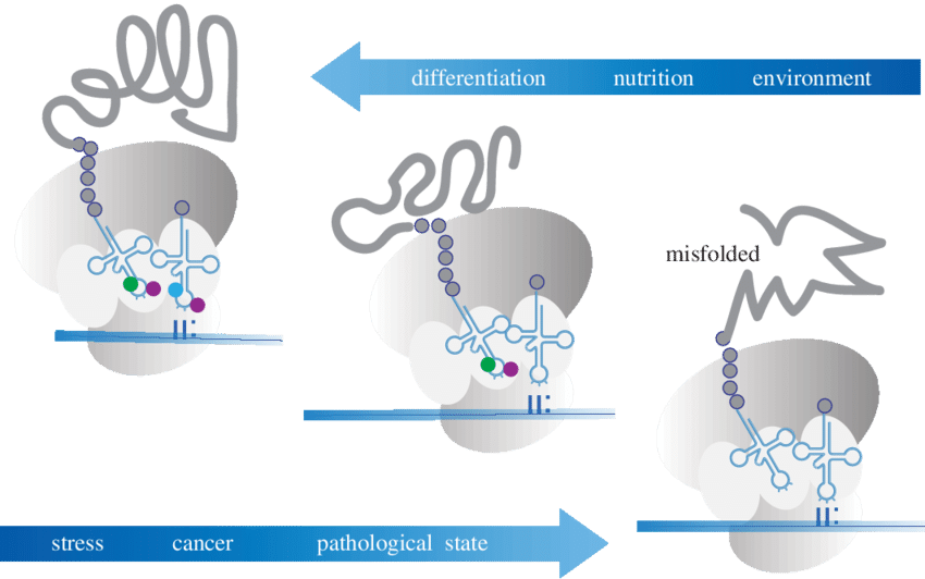 Modifications of the anticodon. Environment clipart environmental condition