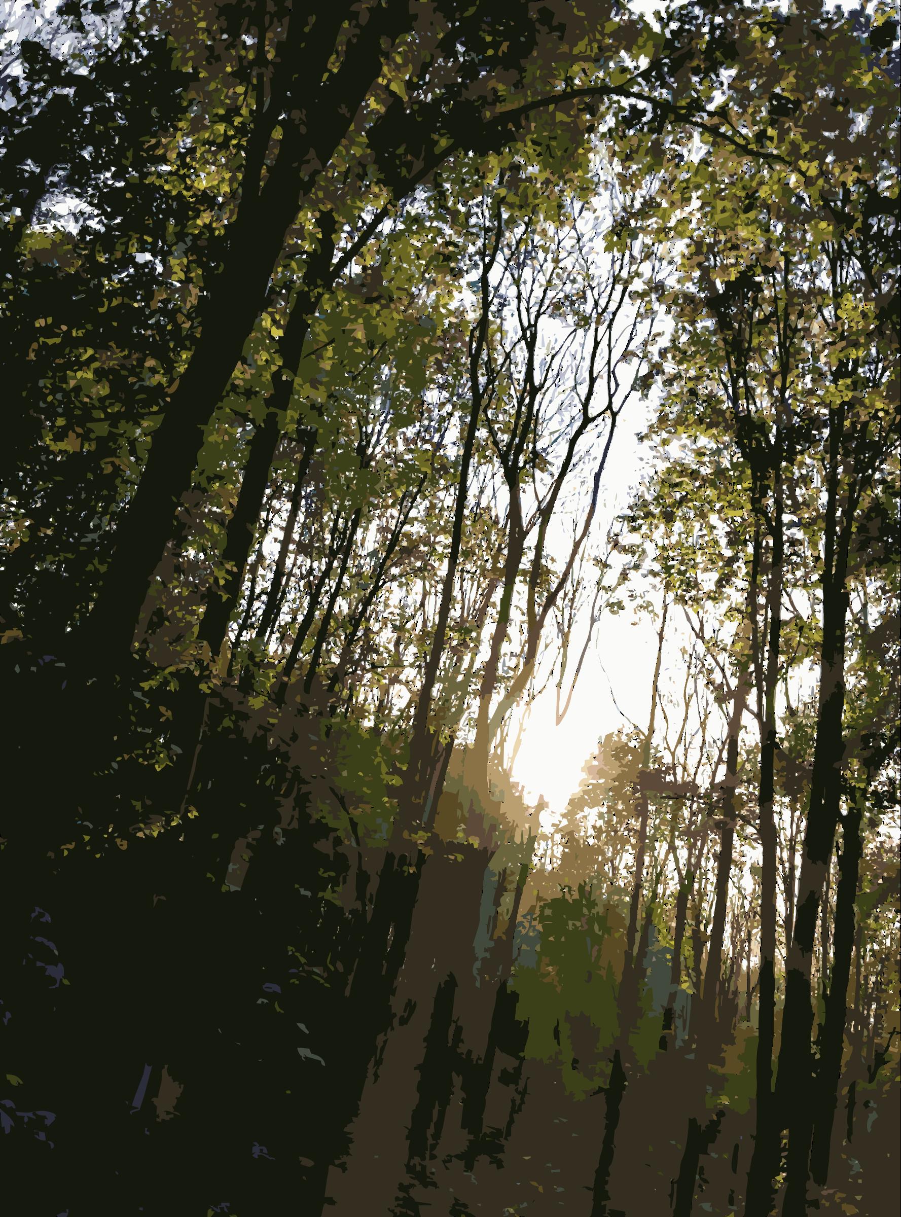 Woodland clipart natural vegetation. Lichtscheid forest again big