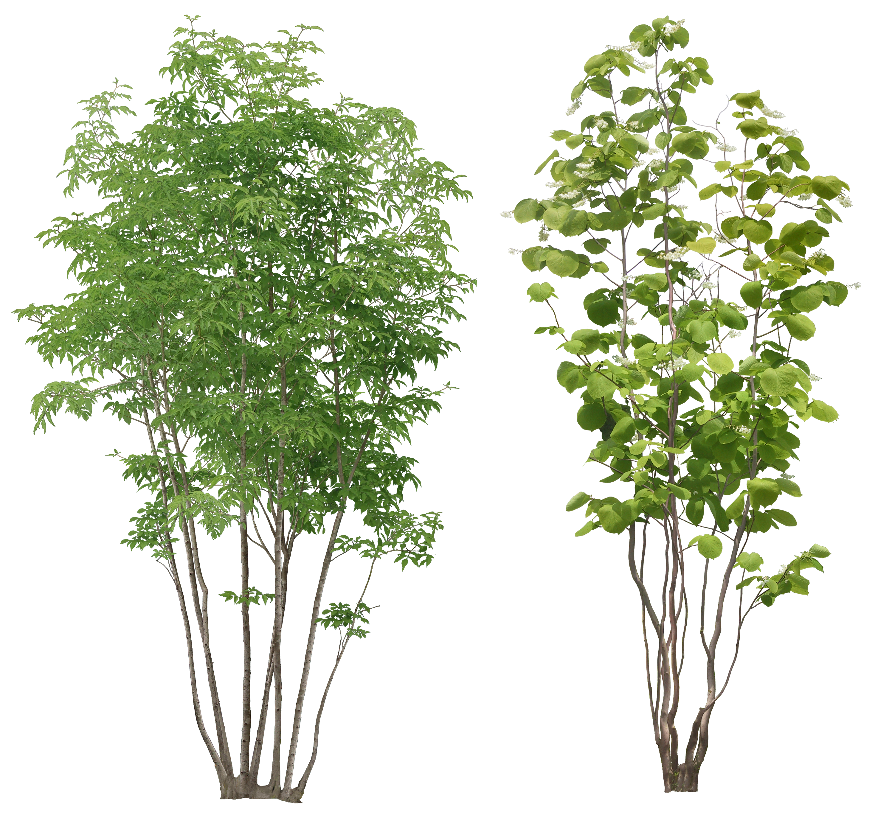 Trees png images. Tree image id photo